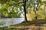 Autumn River Bank framed photo