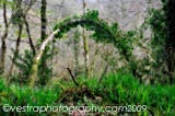 Forest Arch framed photo