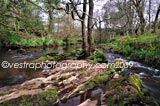 Nesswood Streams framed photo