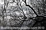 River Trees framed photo
